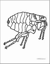 Flea Coloring Clip Insects Abcteach Parasite Clipart sketch template