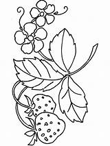 Strawberry Coloring Pages Berries Plant Fruits Printable Colors Getcolorings Recommended sketch template