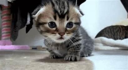 Animal Adorable Cat Kitten Kitty Gifs Animals