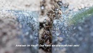 Ameisen Im Haus Ursache : ameisen im haus das kann ein alarmzeichen sein ~ A.2002-acura-tl-radio.info Haus und Dekorationen