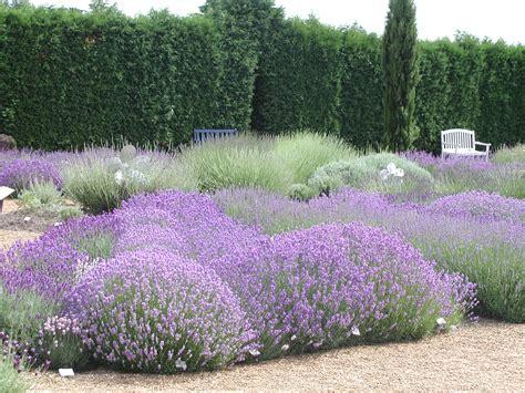Lavendel Und Gräser by Sortiment Gestalten Mit Lavendel