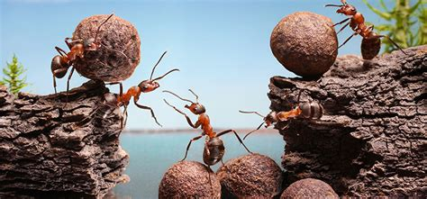 5 Interesting Facts About Ant Behaviors   Rentokil Steritech