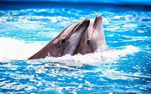 Schöne Delfin Bilder : die 88 besten sch ne hintergrundbilder der liebe f r handy ~ Frokenaadalensverden.com Haus und Dekorationen