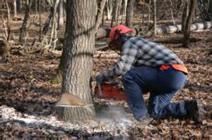 how to cut a tree diy house tips