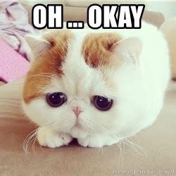Oh Okay Meme - i miss you already please don t leave sad kitten 12 meme generator