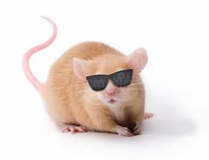 Blinde Gläser Backpulver : blinde maus mit sonnenbrillen stockfoto bild von lustig ~ Lizthompson.info Haus und Dekorationen