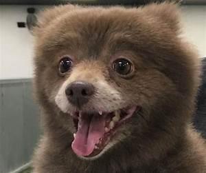 Dog that Looks Like a Bear? Mystery creature baffles the ...