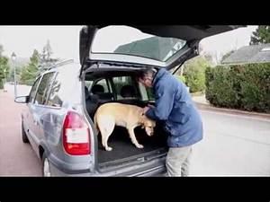 Balise De Localisation : balise de localisation chien chat eye animal iopp tracker youtube ~ Nature-et-papiers.com Idées de Décoration