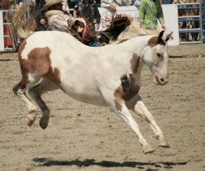 amazing levitating horses horse nation