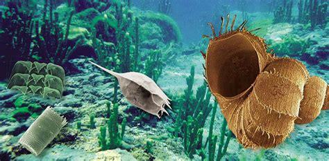 mollusks   exclusively  lake baikal