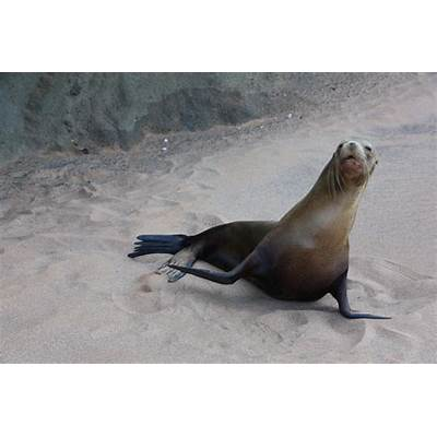 Meet the sea lions of Galapagos IslandsWhere to next?