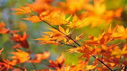 Leaves Autumn Leaf Desktop Wallpapers Fall Branch