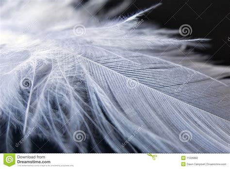white  feather  black background stock photography