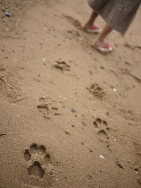 leave monsters footprints  kiko ashiato sandals