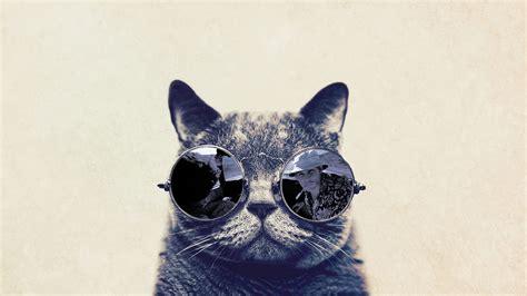 fashion cat  sunglasses hd funny wallpaper wallpaper
