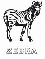 Zebra Coloring Pages Sheets Printable Number Comments Clip Library Clipart Popular Books Coloringhome sketch template