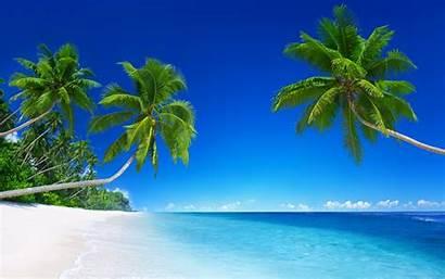 Tropical Palm Landscape Trees Desktop Backgrounds Wallpapers