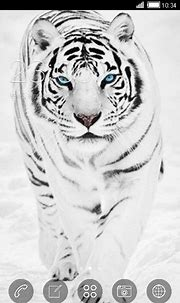 Download Free Android Theme White Tiger CLauncher - 4701 ...
