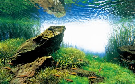 ada aquascape stones aqua forest aquarium ada usa aqua design amano