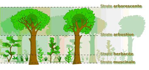 Science Forêt; Protection Développement Forêt
