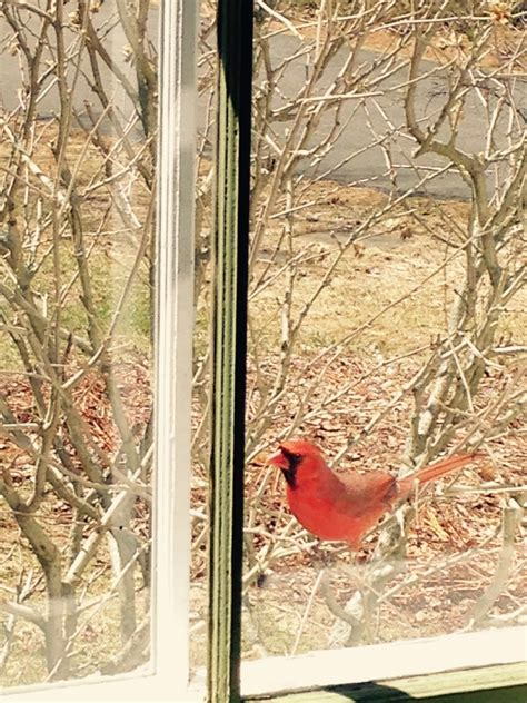my story lives go away red bird please