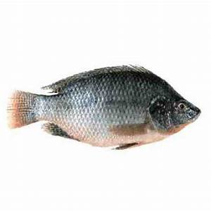 Tilapia Fish Medium 1kg - Online Grocery Store in Kolkata ...
