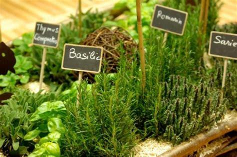herbe de cuisine equilibre fols aromates seronet