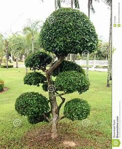 Kleine Bäume Für Den Garten : b ume f r den garten frische haus ideen ~ Markanthonyermac.com Haus und Dekorationen