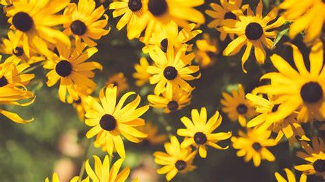 flower yellow garden  hd wallpapers hd wallpapers id
