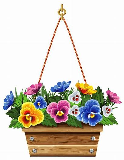 Hanging Clipart Flower Violets Pot Spring Fiore