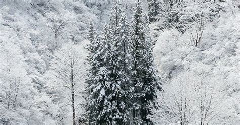 Winter White Snow Wood Forest Mountain #iphone #5s #wallpaper Iphone 6 128gb Verizon Used Charger Olx Vodafone Unlocked And Refurbished 64gb Deals Mercado Livre Ebay Uk Have