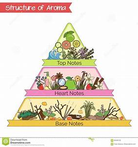 Structure Of Aroma Infographic Pyramid  Stock Vector