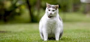 Katze Kotzt Viel : wie viel d rfen katzen wiegen ~ Frokenaadalensverden.com Haus und Dekorationen