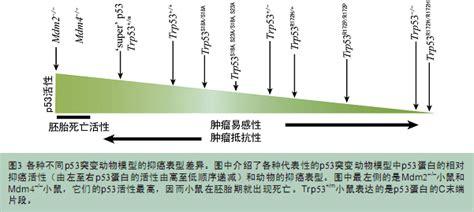space uid 1214 p53 sunsong7的日志 干细胞之家 中国干细胞行业门户第一站
