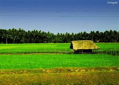 Hijau Sawah Pemandangan Rumput Pertanian Padang Gunung