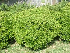 Types of Bushes images