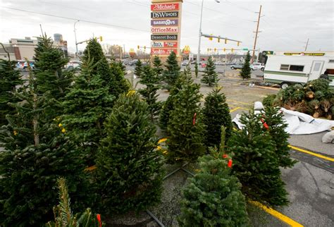 salt lake christmas tree lots tree shortage driving up prices putting some utah tree lots out of business the