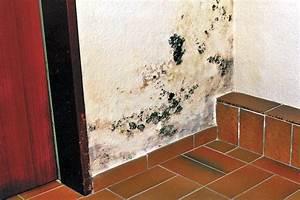 Schimmel Im Bad Beseitigen : schimmel beseitigen ~ Sanjose-hotels-ca.com Haus und Dekorationen