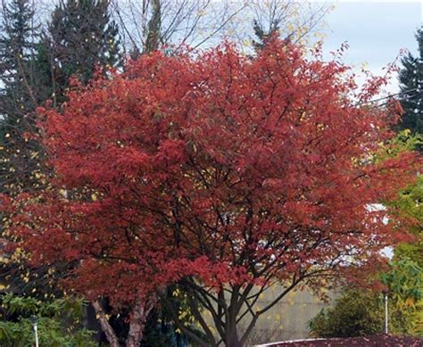trees  wow   autumn    special offer