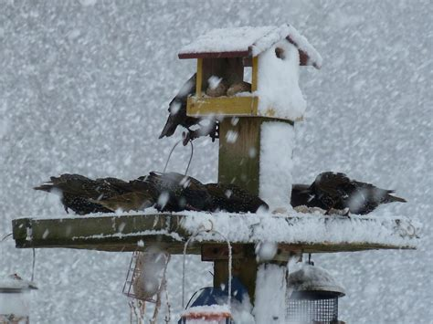 scotland feed wild birds in winter