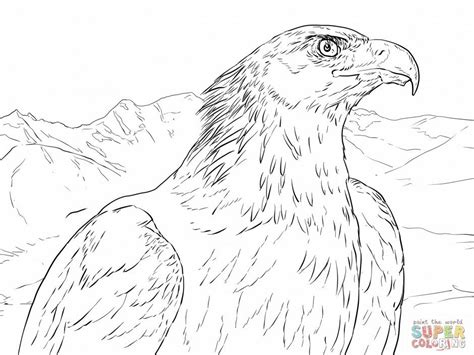 printable pictures  eagles coloring home