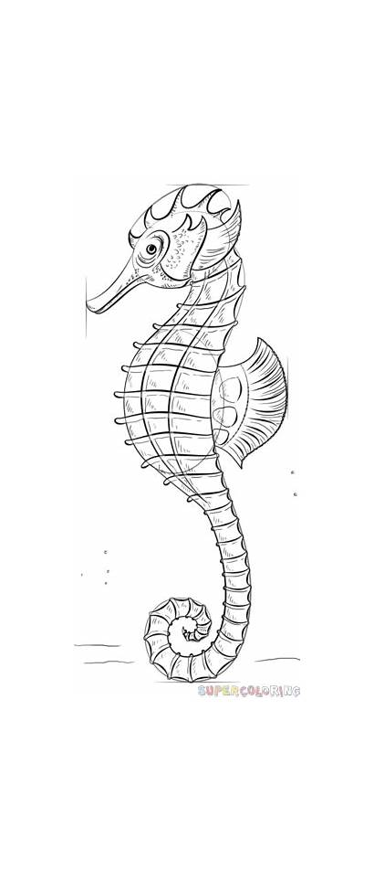 Seahorse Draw Realistic Step Drawing Sea Line
