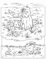 Prairie Coloring Dog Underground Pages Animals Dam Hoover Drawing Template Printable Fuzz Sheets Frenzy Animal Sheet Burrow Nationalgeographic Designlooter Drawings sketch template