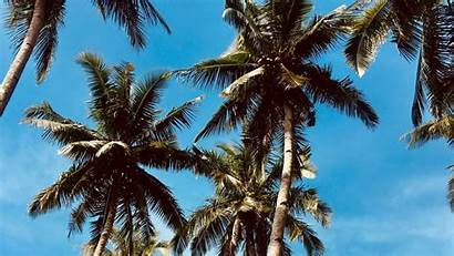 Palm Trees Sky Desktop 1080p Tropics Wallpapers