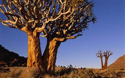Africa South Wallpapers Windows Tree Dry Theme