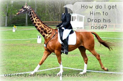 giraffe him nose drop horse why don riding equestrian let go expressions want