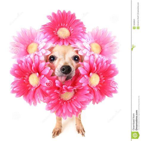 afbeelding bloemen met dier de hond van de bloem stock afbeelding afbeelding 19038941