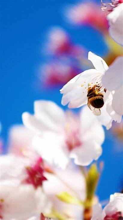 Spring Iphone Flowers Plus Screensavers Cherry Desktop