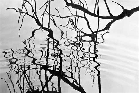 images gratuites arbre la nature branche hiver