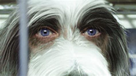 shaggy dog tippett studio barks  vfx animation world network